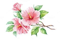 Check out Watercolor pink hibiscus by Astromonkey on Creative Market Watercolor Painting Techniques, Watercolor Projects, Watercolor Flowers, Watercolor Paintings, Watercolors, Nature Drawing, Flower Aesthetic, Flower Wallpaper, Pretty Art