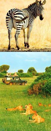 WILDLIFE SAFARI & GORILLA TREK- UGANDA & RWANDA