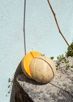 Ester Grass Vergara Photography : Photo