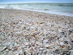 Shelling on Marco Island, Florida