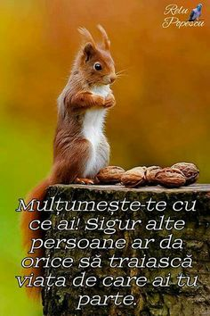 Wisdom, Quotes, Animals, Mariana, Impressionism, Quotations, Animales, Animaux, Qoutes