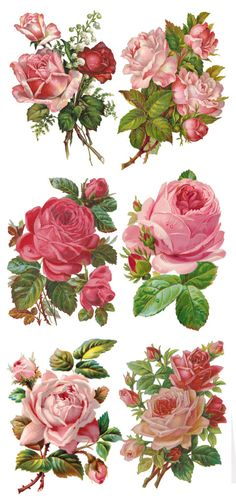 Visit the post for more.You can find Vintage roses and more on our website.Visit the post for more. Vintage Clip Art, Vintage Diy, Vintage Paper, Vintage Images, Decoupage Vintage, Vintage Ephemera, Vintage Cards, Vintage Flowers, Vintage Floral