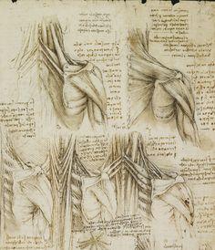 Anatomy Meets Art: Da Vinci\'s Drawings