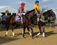 Ride On Curlin in post parade, second in Preakness Photo by Anne M. Eberhardt