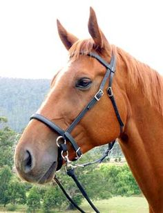 LightRider Bitless Bridle... Mike hurry up and buy me one!