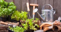 Créer son potager maison de A à Z | Foodlavie