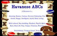 ABC's of a Havanese     This is our Sampson!!! He is now a year old and his mom & dad are Tosha & Michael!!
