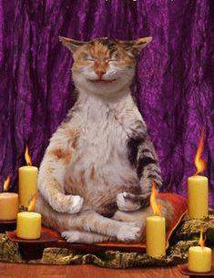 zen | ... ce Phylou dans son sac!!!Gros bisous et passe une belle soirée..zen