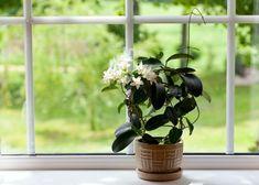 Dormir bem é essencial para todos nós. Se você cultivar certas plantas em sua casa, você pode melhorar significativamente o seu sono e sentir um grande número de benefícios para a saúde.