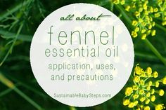 28+ benefits and uses of fennel essential oil for digestive, hormonal, and other support, via SustainableBabySteps.com
