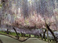 まるで妖精の世界。北九州の河内富士ガーデンファンタジー感に溢れて絶世の景色だった - TRIPHUNTER