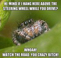Misunderstood Spider: whoa! Watch the road!