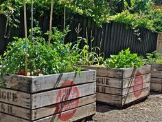 Recycled apple crates planter boxes, perfect for apartment living and small spaces.