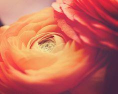 Nature Photography Macro Flower Wall Art 8x10 by MarianneLoMonaco #fpoe