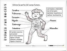 """""""El cuerpo humano por dentro"""" (Fichas de Ciencias Naturales de Primaria) Homeschool, Science, Memes, Management, Google, Repurposed, Human Body, Paper, World"""