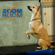 Zoom Room Dog Agility Training