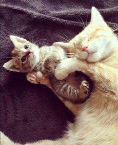 ❤️ So cute!