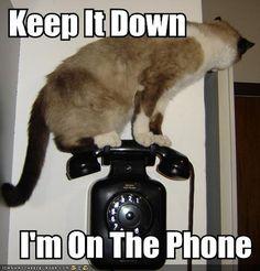 Google Image Result for http://2.bp.blogspot.com/-tVxddfbtU9k/Tqb3p8xm8WI/AAAAAAAAFTM/5m4VBWw7w7w/s1600/funny-pictures-cat-on-phone.jpg