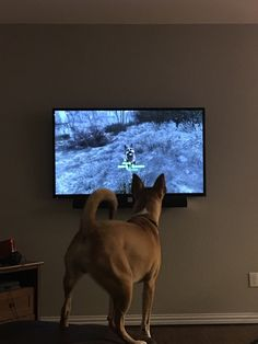 biggest problem with Dogmeat in Fallout 4