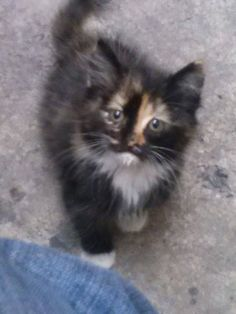 Adorable kitten! Look at that sweet face:)