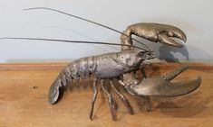 Sculpture 28 x 53 x 30 cm £7,000 - or spread the cost, interest-free, over 10 months with Own Art. Part of the Royal Society of Marine Artists Annual Exhibition 2020 at Mall Galleries 30 September to 10 October #MarineArt #AffordableArt #ArtfortheHome #Seaside #Lobster #TheSea #SeaFood 30 September, Royal Society, Affordable Art, Seaside, Galleries, Mall, Seafood, Artists, Sculpture