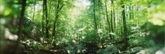 Trees in a Forest, Hudson Valley, New Jersey, USA Photographic Print at AllPosters.com