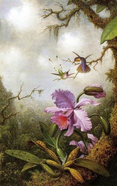 """Martin Johnson Heade .  """"Two Hummingbirds and a Pink Orchid"""""""