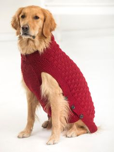 free knitting pattern for large dog sweater - Buscar con Google
