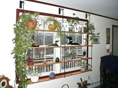 window shelves for plants window plant shelves decorating window treatment window display wrought iron home window plant hanging window shelf for plants window sill shelves for plants Indoor Window Planter, Window Shelf For Plants, Kitchen Window Shelves, Window Sill, Indoor Plant Shelves, Outdoor Shelves, Window Greenhouse, Display Window, Home Design Software Free