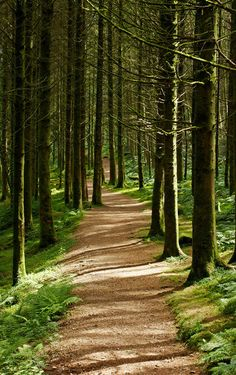 forest path                                                       …