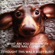 What are you doing with those nail clippers?! I thought this was a belly rub!?