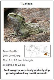 Animals of Australia/Oceania - Printable Montessori Learning Materials by Montessori Print Shop.