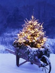 Lighted Christmas Tree in Wheelbarrow Photographic Print by Jim Craigmyle at… Noel Christmas, Primitive Christmas, Country Christmas, Outdoor Christmas, All Things Christmas, Winter Christmas, Christmas Lights, Vintage Christmas, Christmas Decorations