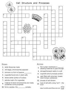 Cells+Word+Search+Worksheet Cells worksheet, Science
