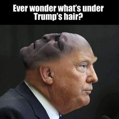Voldemort was actually very intelligent, sooooo no.<<Oh my god. I believe even Voldemort wouldn't use Donald Trump. Harry Potter Funny Pictures, Harry Potter Jokes, Harry Potter Fandom, Memes Humor, Trump Hair, Desenhos Harry Potter, Super Funny Memes, Hilarious, Nerd Funny