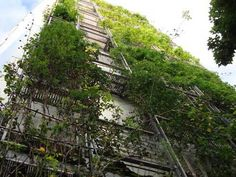 Aoyama vertical rose garden