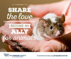 You care about animals, especially those in labs. Take your love further and #volunteer to be an #HSUS ally!