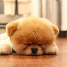 Cute Baby Puppies sleeping