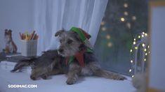 La #Navidad nos encanta, ¡incluso a tu #mascota! Llénala de #magia con todos los #accesorios que tenemos para ellos y para cada rincón de tu casa Dogs, Kitty, Doggies, Magick, Pets, Xmas, Animales, Accessories, Pet Dogs