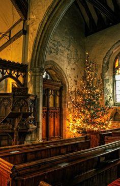 ❥ Christmas Tree, Kent, England