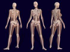 3D Female Skeleton Anatomy - Pierre A. Riffard - Wikipedia, the free encyclopedia