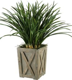 Areca Grass in Weathered Wooden Planter Box