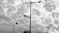 Sky #flyingBird#streetlights