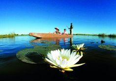 Uma viagem no Delta do Okavango - Botswana - Bilhete de Viagem