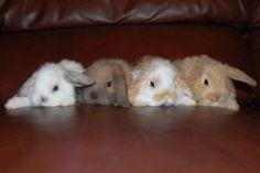 Baby Bunnies 1 by bivoirart