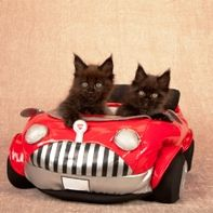 What to Pack When You're Traveling with Cats By Car