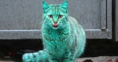 This Stray Cat Accidentally Turned Itself Green #cats #cattoys #catowners