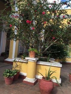 More plants in courtyard