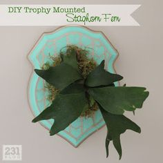 Mounted stag horn fern