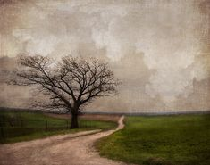 You've Come This Far by jamie heiden, via Flickr